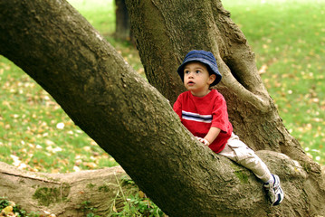 Little Tree Climber