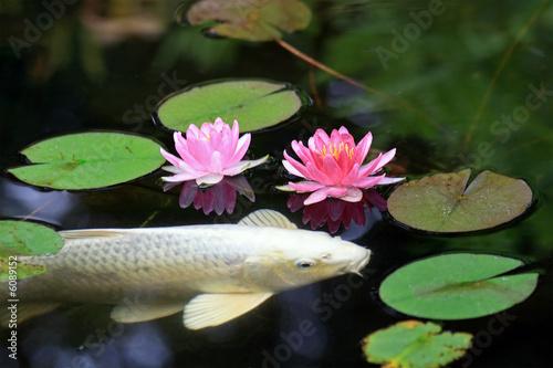 Leinwandbild Motiv Koi Pond