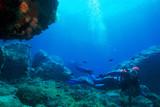 Fototapety subacquea