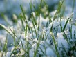 Close-up of fresh green straws with snow and sun light