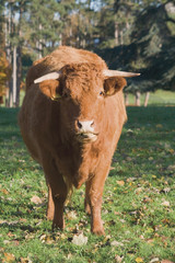 cattle chateau impney estate droitwich spa worcestershire