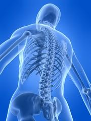 rückseite eines menschlichen skeletts