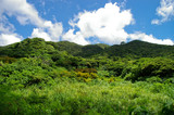 Jungle hills in Ishigaki poster