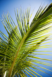 Detail of palm tree leaves in backlight poster