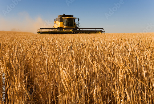 harvester working in a wheat field,(focus on front row of wheat) - 6118796