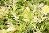 lettuce leaves - vegetarian background poster