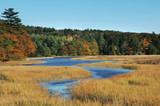 Autumn shot of marshy wetlands poster