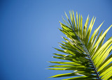 Close up of palm tree in backlight poster