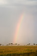 Beautiful Rainbow in the Kenyan Savannah.