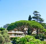 Cèdre devant une résidence de vacances à Cannes poster