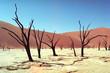Panorama desert