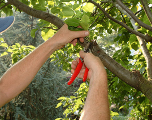 pruning a tree with hand pruners