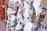 Cattle skulls on rack in Santa Fe poster