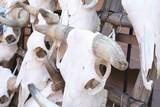 Cattle skulls on rack for sale poster