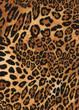 sfondo leopardo tappeto