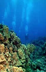 Scuba Divers swimming towards the reef in Molokini Hawaii