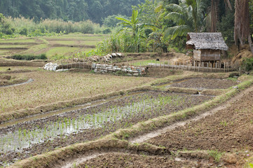 Thailand - farm buildings in the village