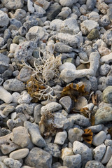 Detail of many assorted sea shells. Suitable for background.