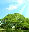 Landscape of green summer tree with sun rays