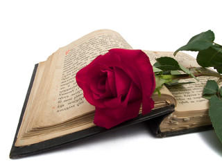 Red rose on an old book