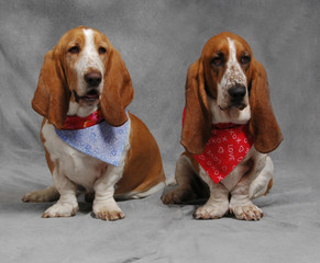 A Pair of Bassets