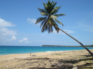 lonely beach with palm, Dominican Republic