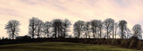 Bare trees on a ridge across a field at sunset. poster