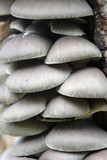 Group of tree fungi growing on tree trunk poster