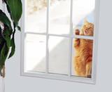 Fototapety Cat Knocker