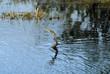 snakebird fishing