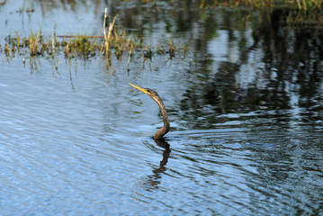 snakebird fishing