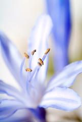 flower. macro/ depth of field