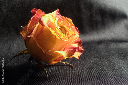 Dry rose on black fabric