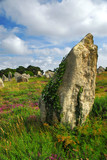 Green vines on prehistoric megalithic monuments in France poster