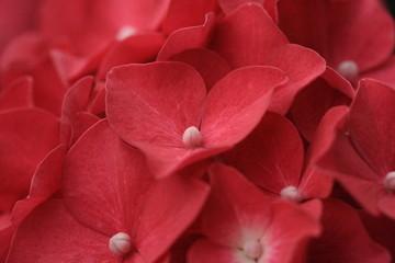 Rosso splendore