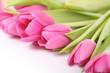 Fototapete Ostern - Frühling - Blume