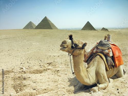 Leinwanddruck Bild Symbol Egypt's - Cairo, Giza - camel with pyramids