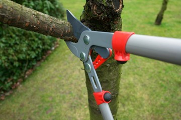pruning branches on a tree