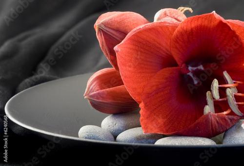 Leinwandbild Motiv rote Amaryllis auf schwarzem Teller