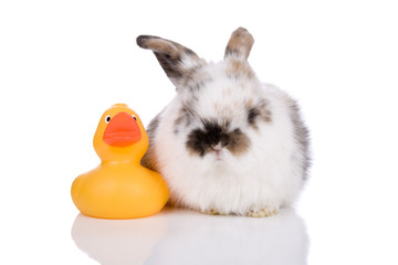 Cute little bunny sitting on white with a bath duck