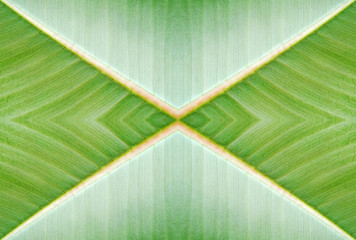 Abstract natural background - created from photo of leaf