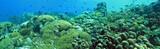 Underwater panoramic  poster