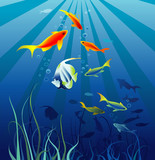 Sea life. Fish, seaweeds. Space for text. Vector illustration poster