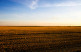 Autumn morning field. High contrast colors. poster