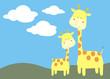 paisaje jirafas
