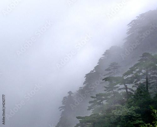 Forêt brumeuse dans la montagne chinoise