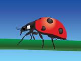 Ladybird. Vector poster