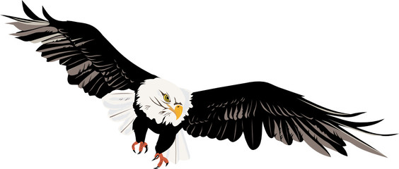 bald eagle vector file