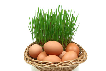 Easter and spring symbols - chicken eggs and green wheat shoots