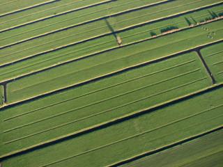 dutch green grass pattern countryside lands